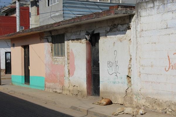 joquicingo-primera-visita (7)